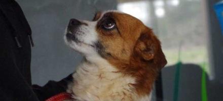 wieder Hunde aus Rumänien gekommen