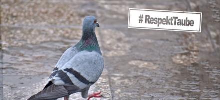 Respekt Taube
